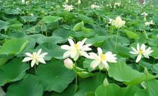 绿环水生植物种植园