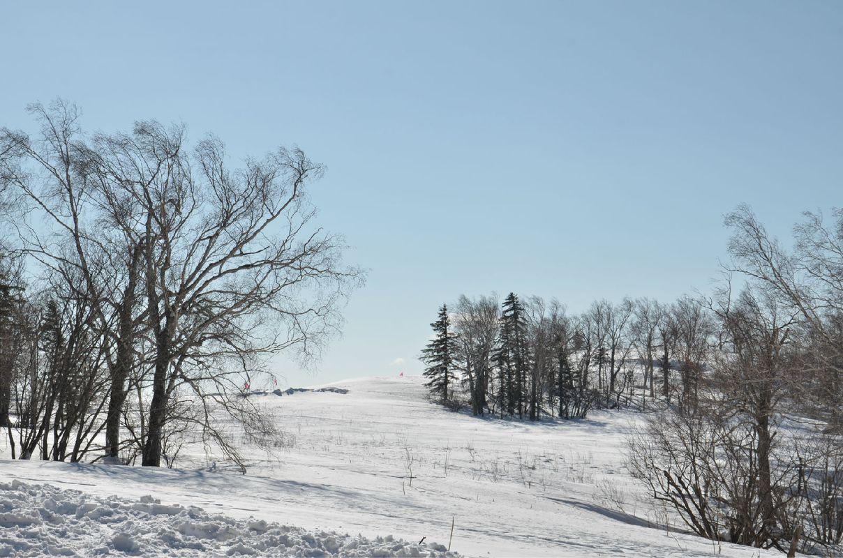 冬天的东北,只有松树是有叶子的图片