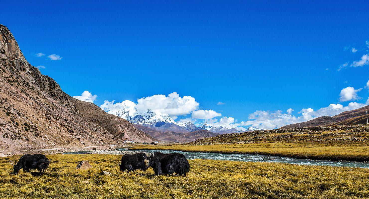 西藏牦牛风景高清大图