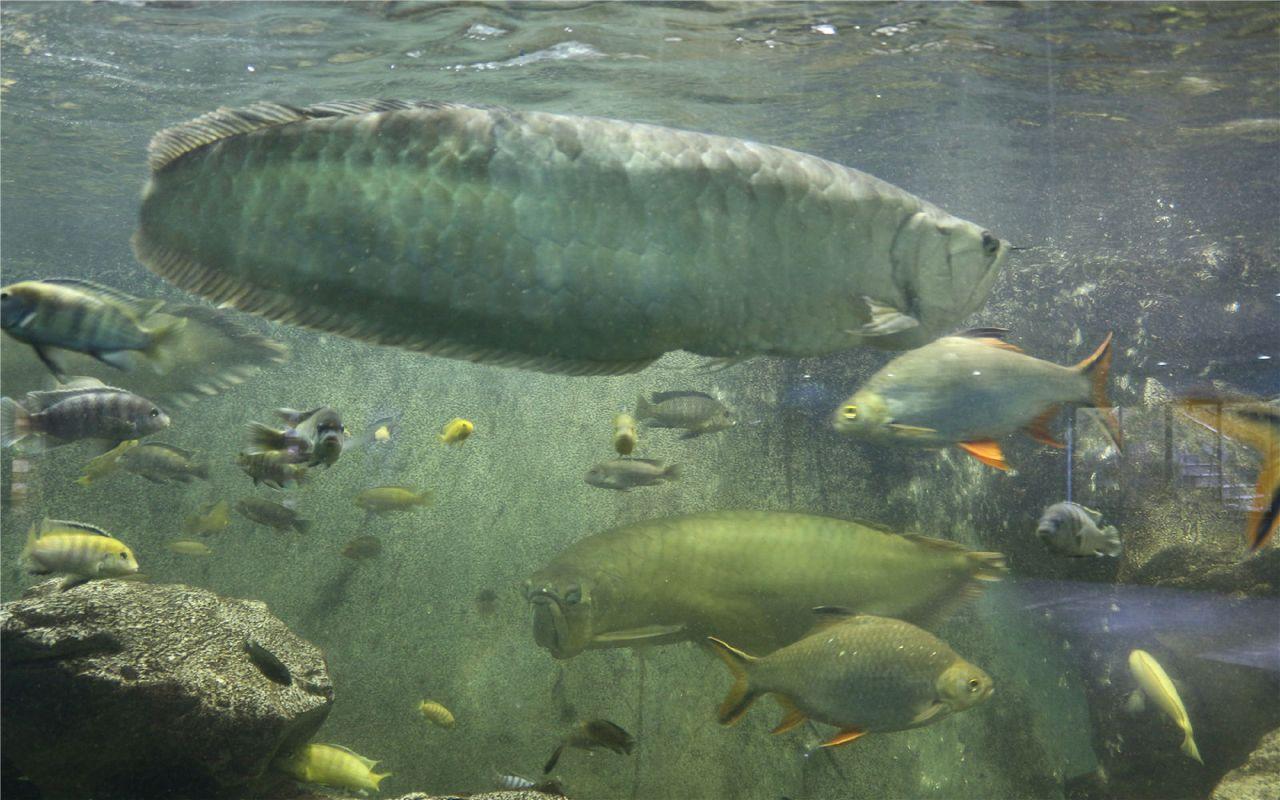 壁纸 动物 海底 海底世界 海洋馆 水族馆 鱼 鱼类 1280_800