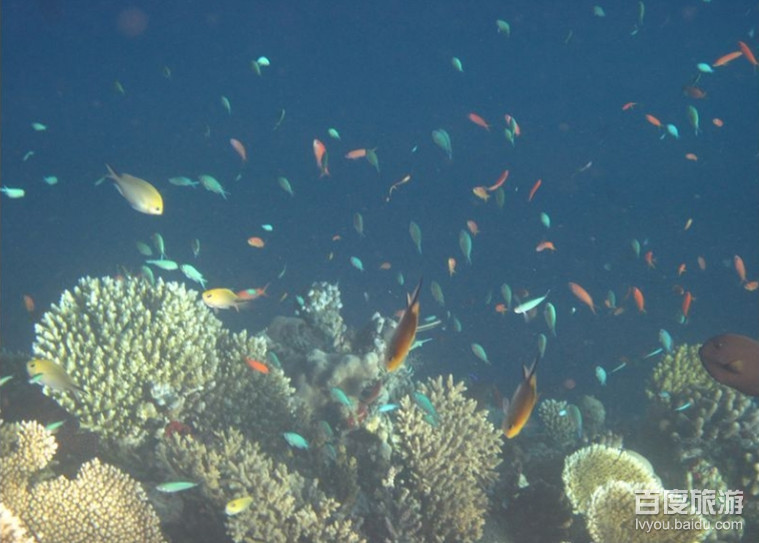 壁纸 海底 海底世界 海洋馆 水族馆 桌面 759_543