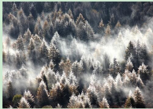 北欧风雾凇背景手绘