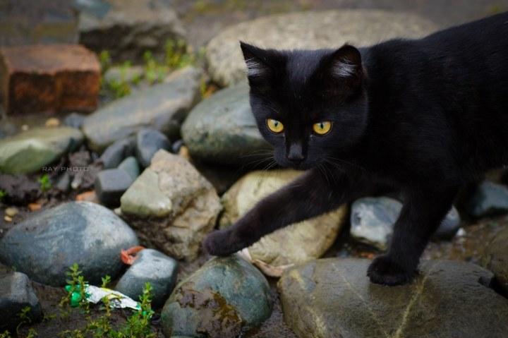 雨后河边散步的小黑猫