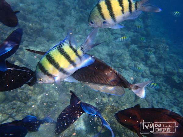 壁纸 动物 海底 海底世界 海洋馆 水族馆 鱼 鱼类 600_450