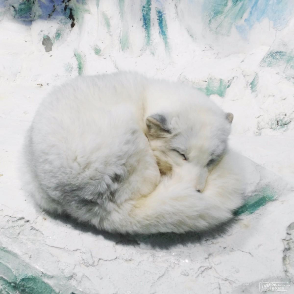 累趴下的可爱图片带字动物图片