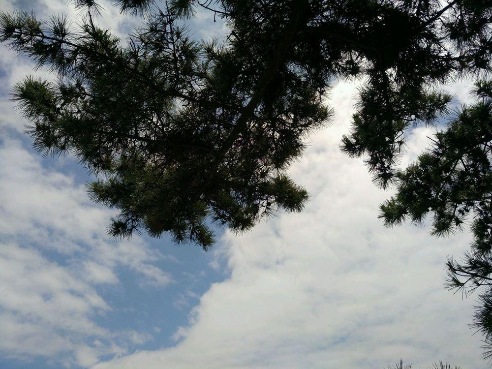 青岛林越洲家庭背景