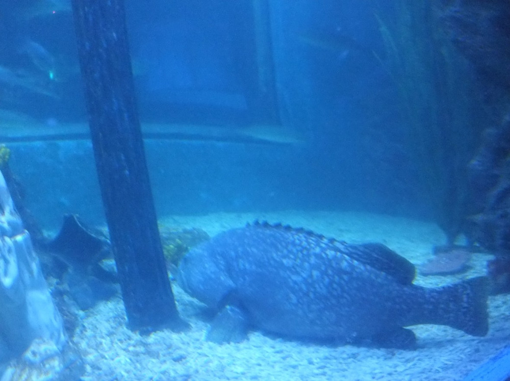 壁纸 动物 海底 海底世界 海洋馆 水族馆 鱼 鱼类 1000_747