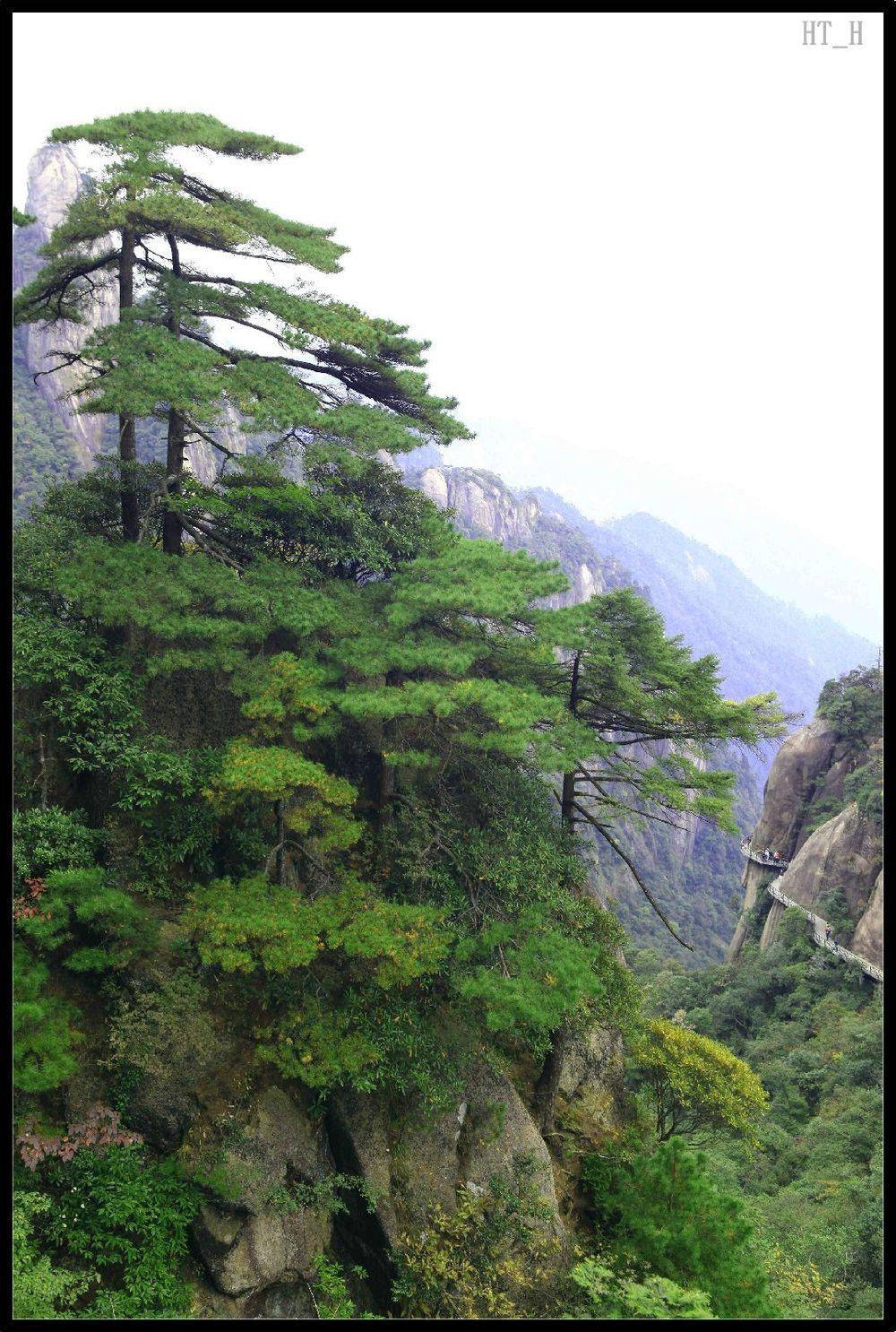 壁纸 风景 树 松 松树 1000_1486 竖版 竖屏 手机