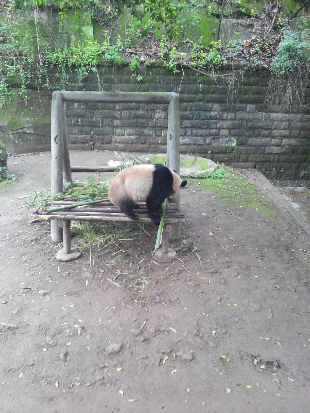 重庆动物园一日游