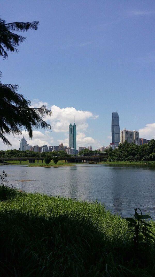 高清公园竖屏风景图片