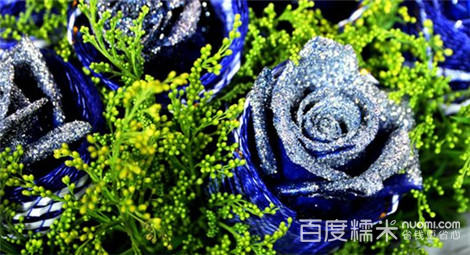 雪绒花视频妖姬黄蓝色逆连炮樱草战图片