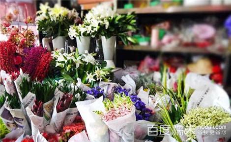 雪绒花视频妖姬黄手法樱草蓝色芦荟图片