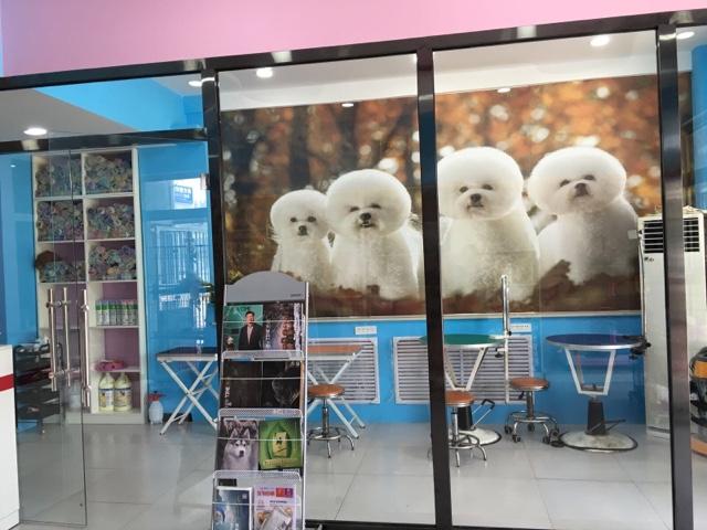 派多格宠物店(丽景蓝湾博阳店)