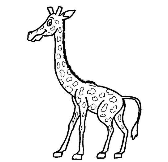 长颈鹿怎么画