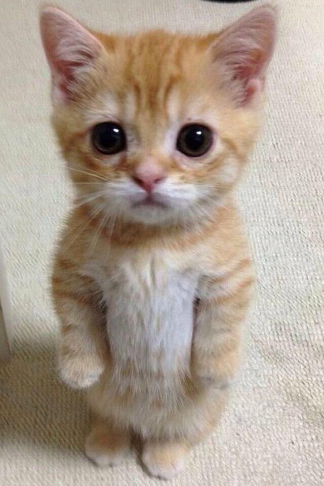 这只猫是怎么站起来的图片