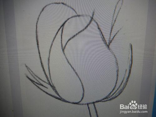 玫瑰花铅笔画法步骤