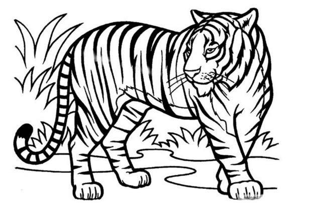 老虎最简单的简笔画怎么画