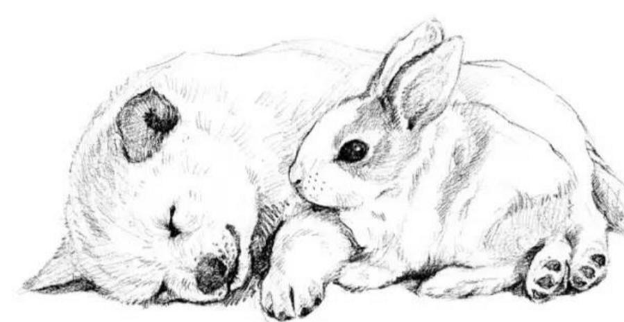 动物素描丨教你画可爱的狗狗和小兔