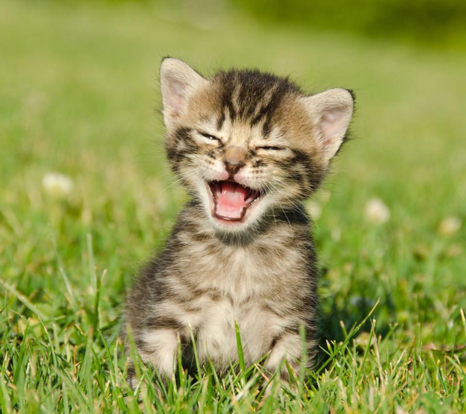 非常可爱真实小猫的qq头像