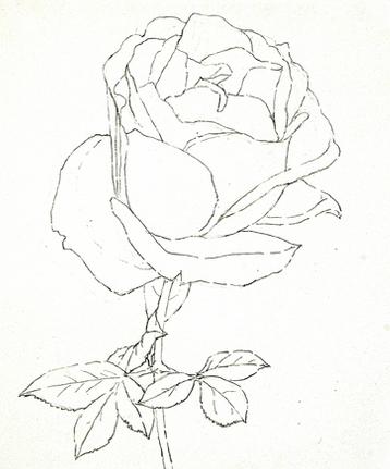 玫瑰花彩铅怎么画