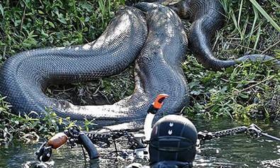 巨蛇公主游出蛇穴被鸟人是什么电影