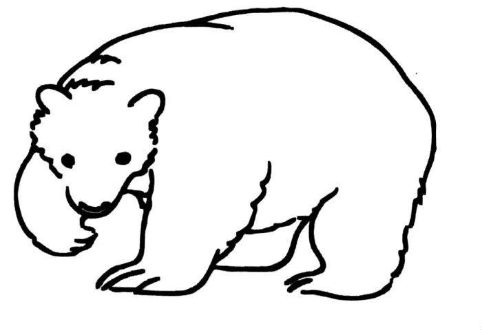 北极熊的简笔画