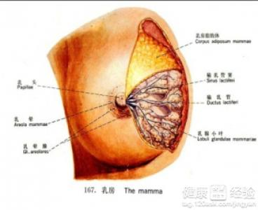 展开全部 乳腺疾病分类有很多种,多数乳腺疾病患者都会出现乳腺实性