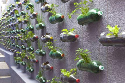 塑料瓶手工制作大全植物