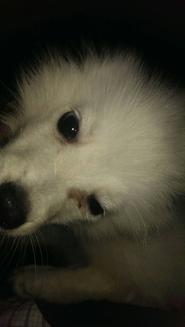 动物伤心流泪图片
