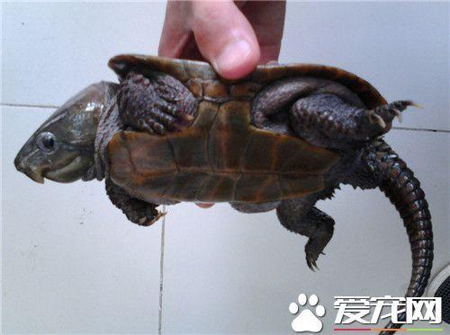 乌龟是什么动物?
