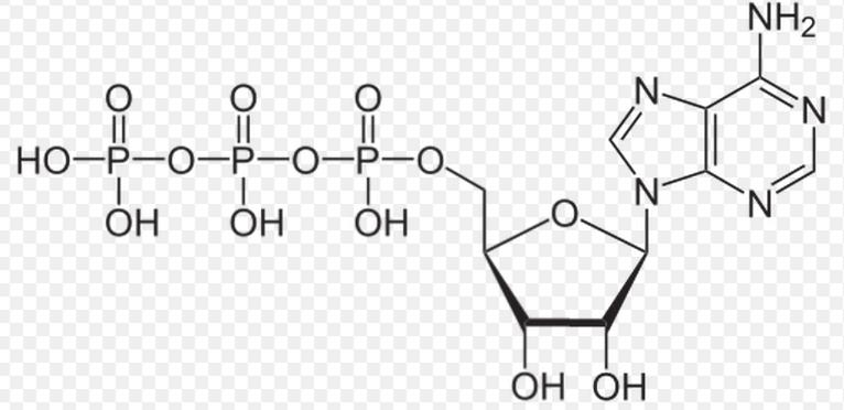 如乙酰磷酸,1,3-二磷酸甘油酸,氨基酰-amp;3,烯醇磷酸,如磷酸烯醇式