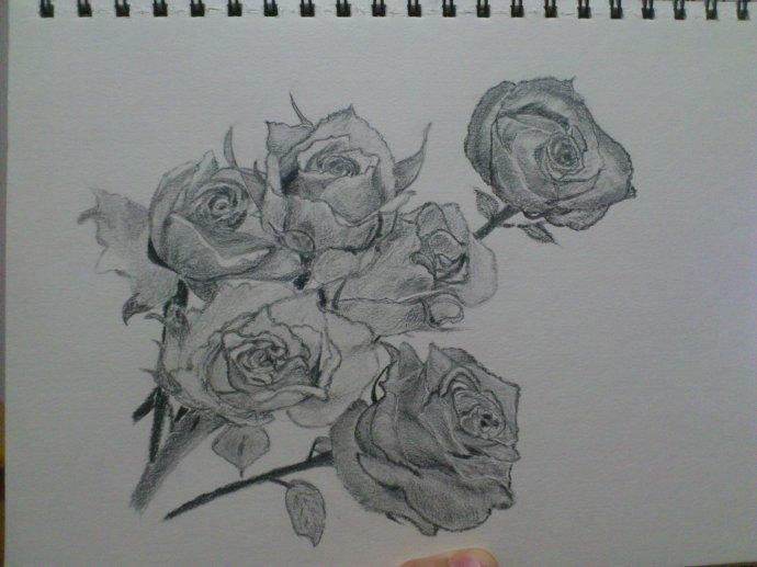 怎么手绘玫瑰花图片简笔画