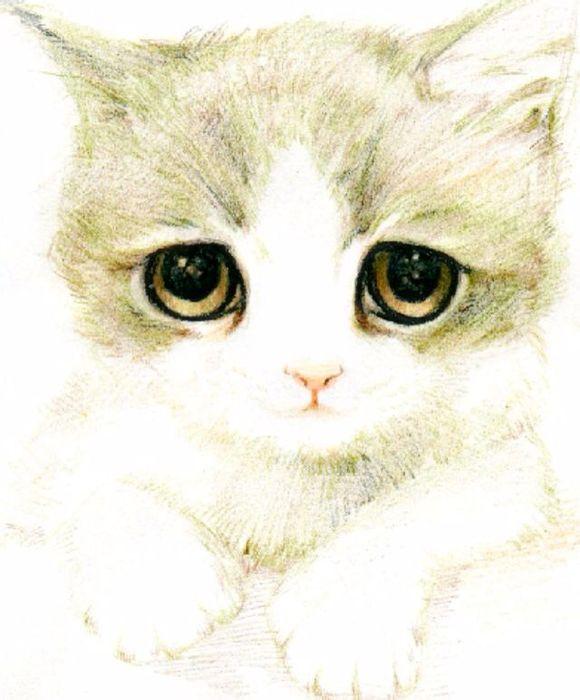 手绘而且很真实的猫咪图片