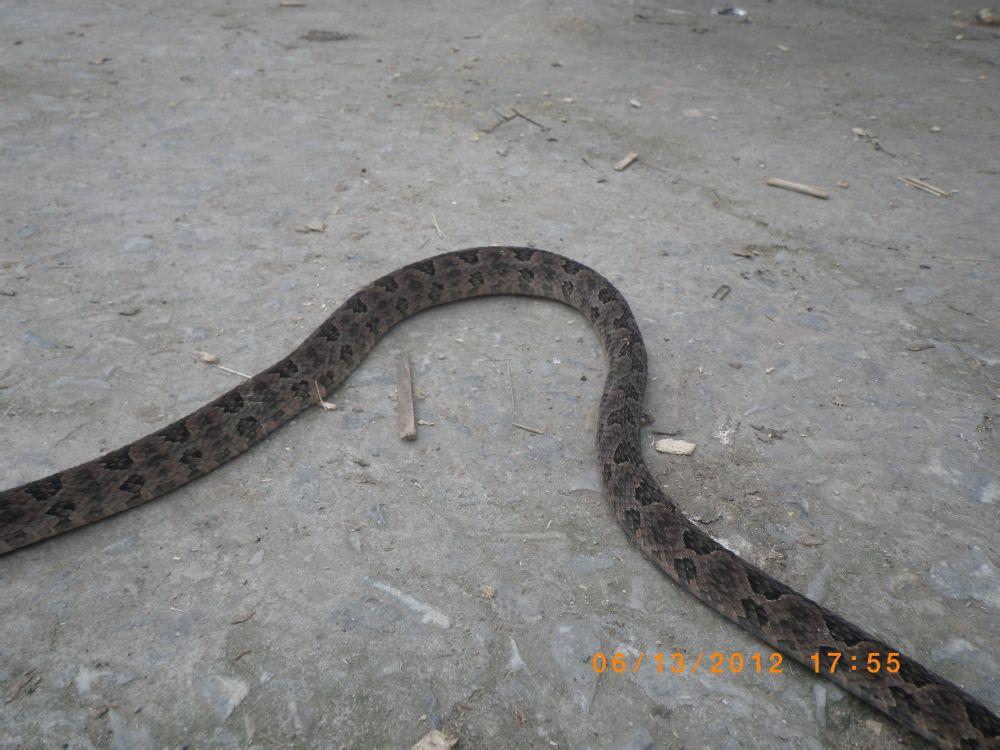 求解:这是何方神蛇?