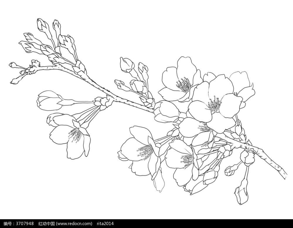 求 手绘桃花的图片!