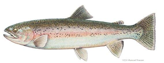 鲑鱼会利用太阳和地球磁场的引导,游回它自己的出生地里进行繁殖,而研
