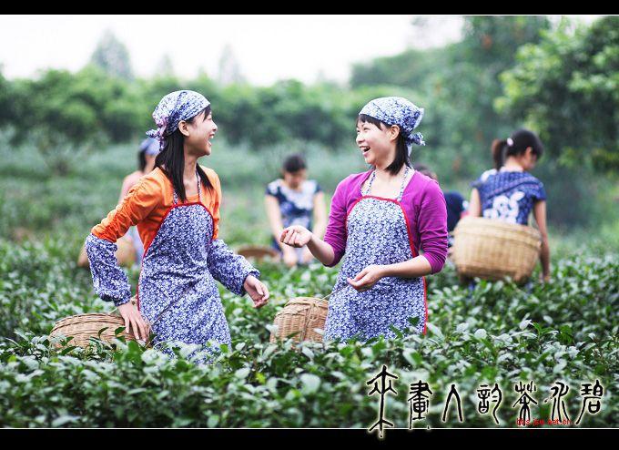 茶是故乡浓的演职员表