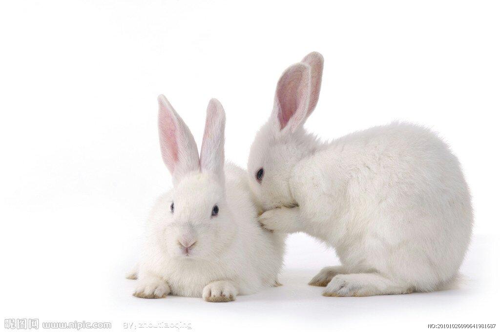 壁纸 动物 兔子 1024_680
