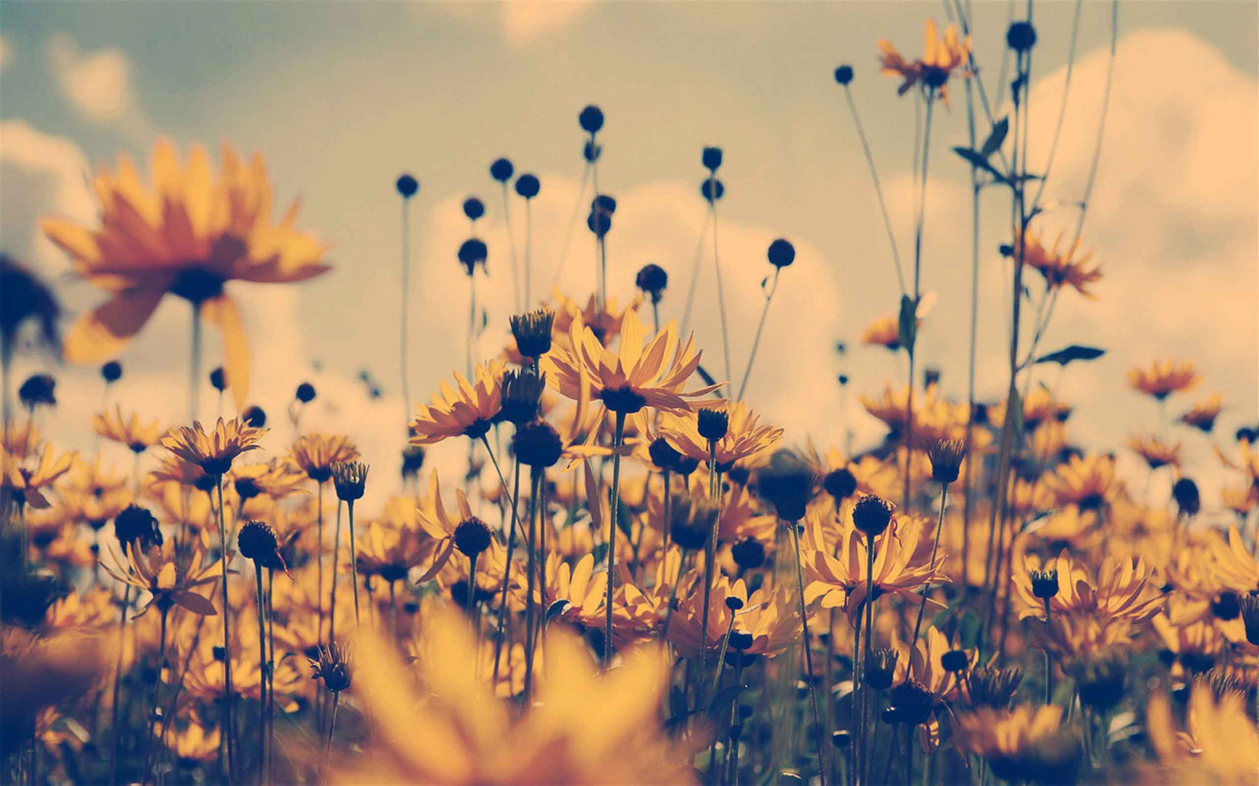 可爱唯美图片 可以有背影 阳光 花之类的,但不要人的正面的,有意境一图片