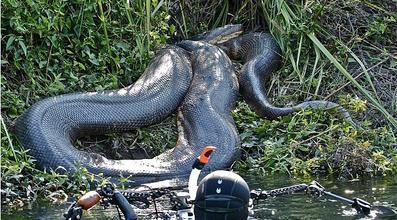 泰坦蟒的发现巨蟒