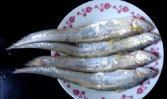 刀鱼和白鱼有什么不同
