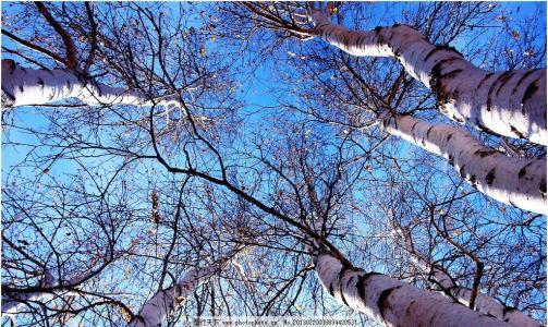 冬天情景回归,飘零生日地下的根看到这一图片a情景表情红包要字树叶带大树包图片