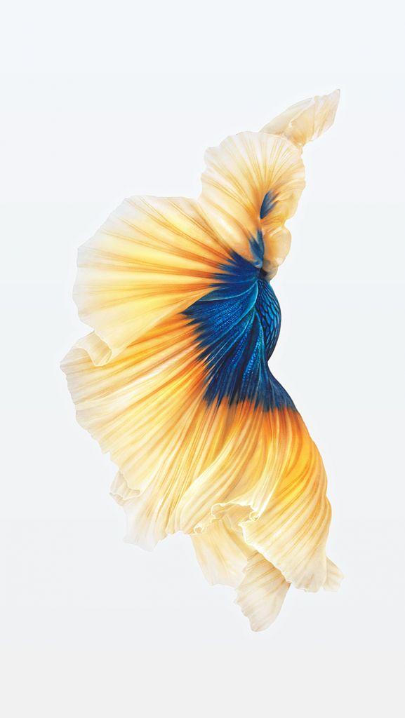 苹果6s动态壁纸鲫鱼怎么下载