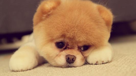 求解这是什么种类的狗狗