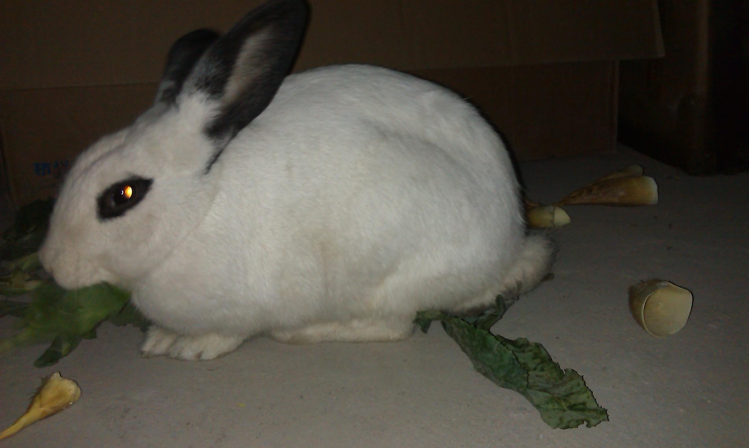 谁告诉我这只品种是兔子的,大约多大了?镇魂街中的皇甫龙斗图片