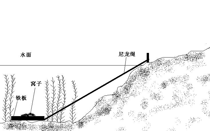 鲫鱼结构图简图