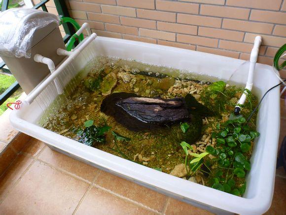 小型自制养龟池设计图图片