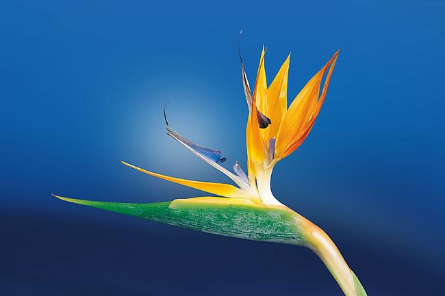 花语是感谢的有什么花
