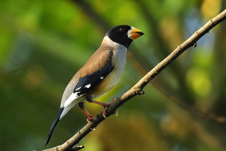 谁能告诉我这是什么鸟?