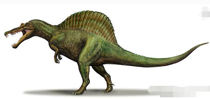 其中的恐龙埃及棘龙是目前已知最大的食肉系统,体长12到20.快穿肉玩具亚种简图片